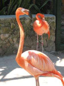 Don't miss the World Famous Flamingo March!